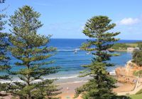 Norfolk Pines Terrigal